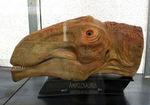 reconstitution d'une tête d'Ampelosaurus pour le Musée des Dinosaures à Esperaza.
