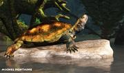 Pleurosternon, tortue, crétacé, Angeac, paléontologie, préhistoire, reptile, chélonien, Michel Fontaine